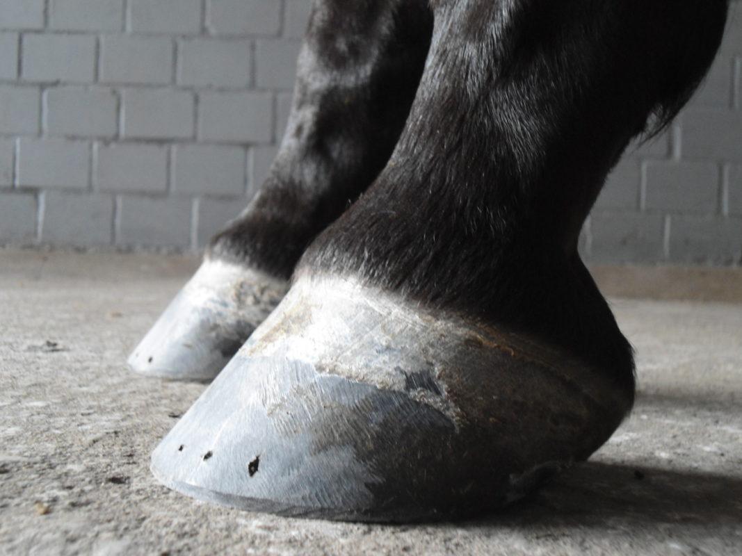 Rekonvaleszenz für Pferde