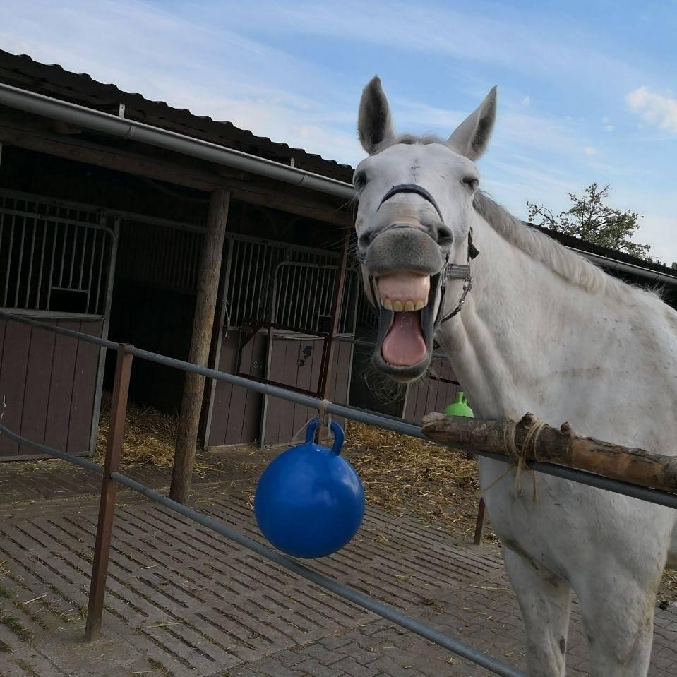 Ganzheitliche Pferdetherapie Calle