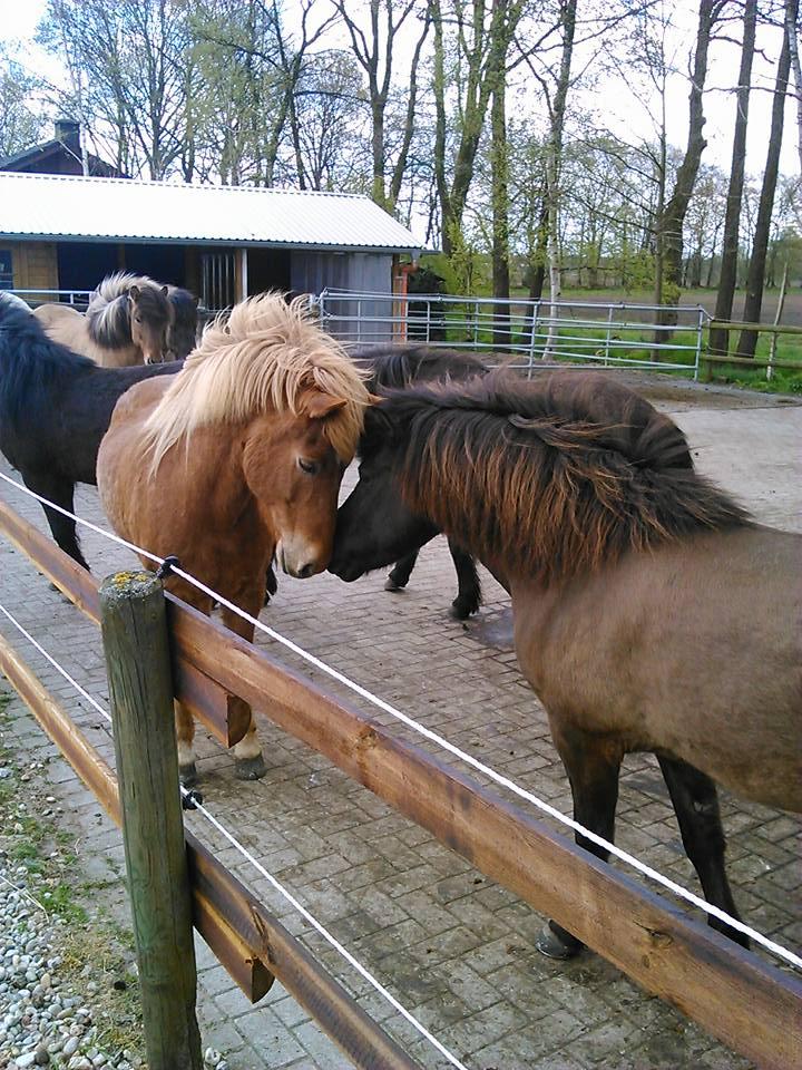 Ganzheitliche Pferdebehandlung durch das REITGEIST-Team