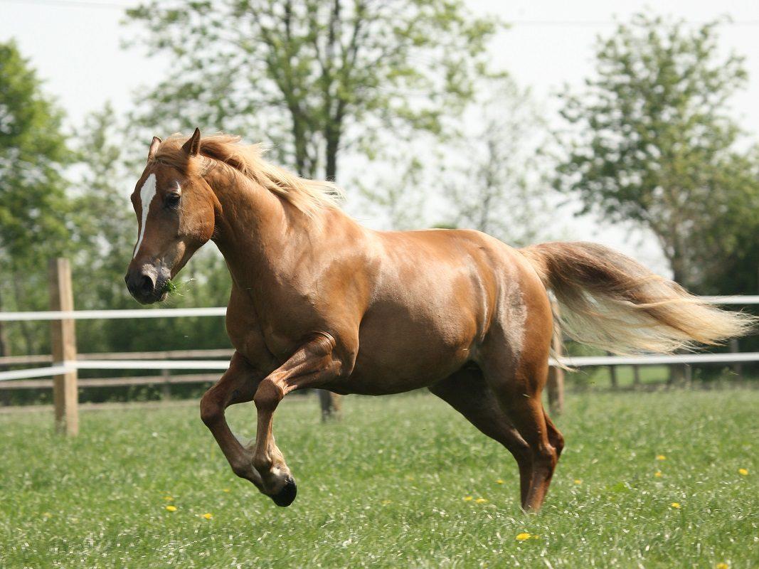 So wird dein Pferd fit und gesund!
