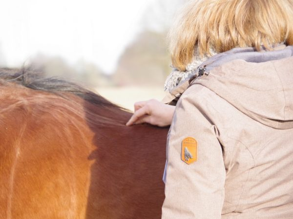 Massage und Mobilisierung am Pferd