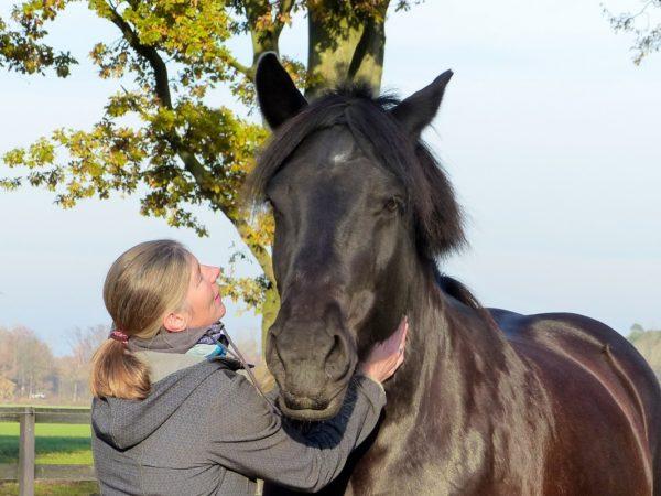 Touch for health - weil Pferdegesundheit Hauptsache ist