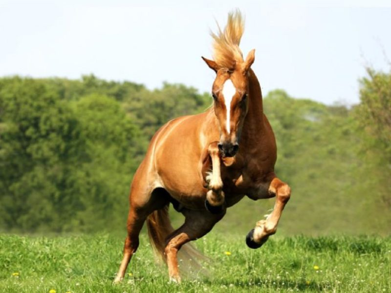 Ein gesundes Pferd ohne Pferdekrankheiten