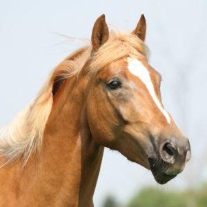 Ganzheitliche Pferdebehandlung - Pferdeosteopathie Pferdephysiotherapie Pferdetherapie