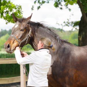 Reitakademie REITGEIST bietet Reitunterricht - Reiturlaub für erwachsene Reiter, Angstreiter und Reiter mit Handicap
