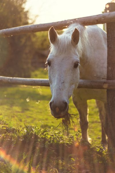 Pferdkrankheiten effektiv vorbeugen