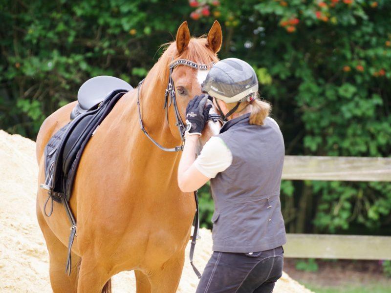 Reitakademie REITGEIST stärkt Pferd und Reiter natürlich ganzheitlich