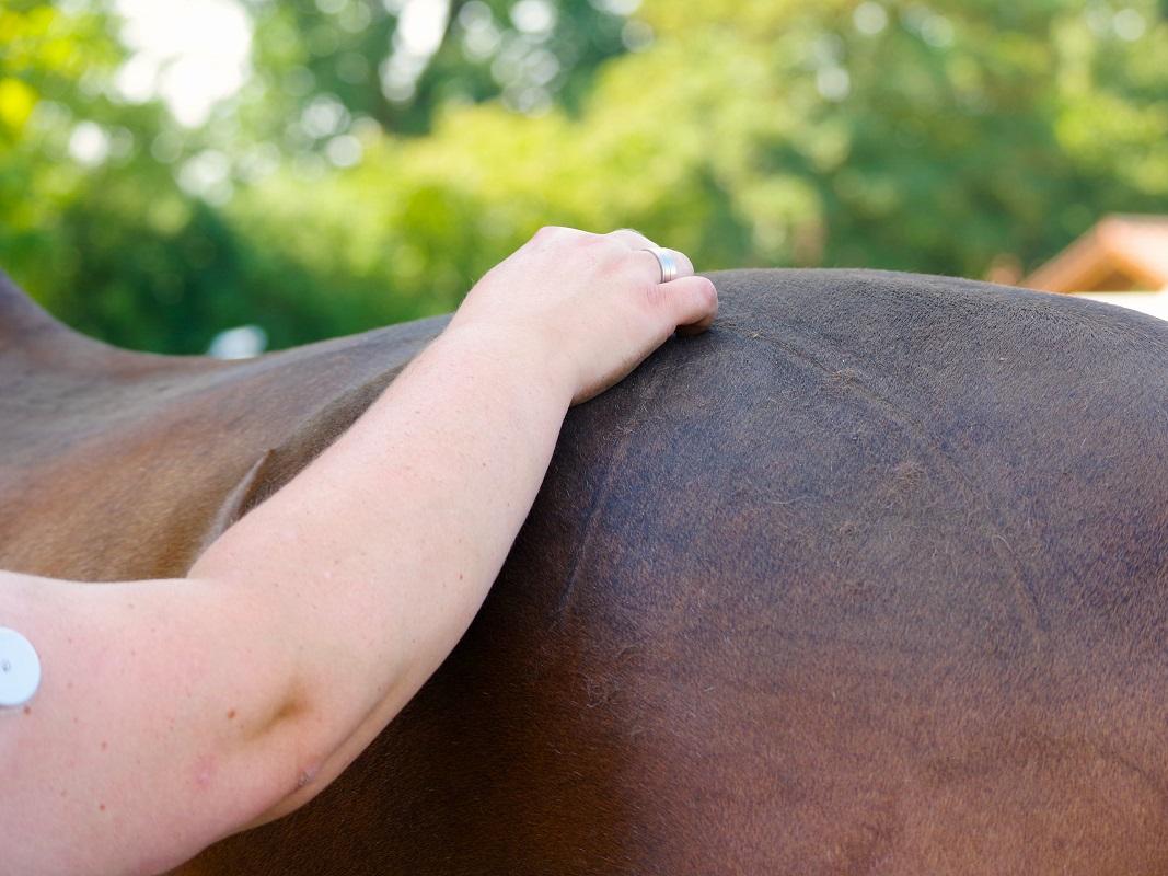 Ganzheitliche Pferdetherapie