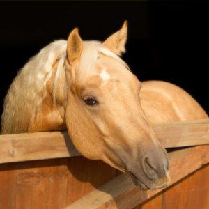 Pferde aktuell