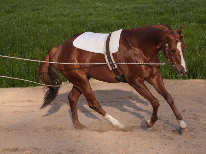 Liebevolles PferdeRehaTraining nach Verletzung oder OP