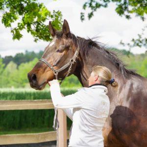 Ausbildung Ganzheitlicher Pferdegesundheitsberater - Reitgeist Akademie